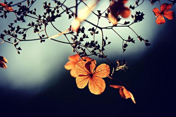 flower-3876195__480.jpg